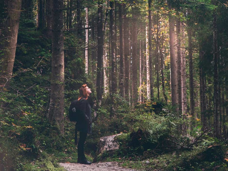 Guide till skogsbad – inomhus och ute i naturen