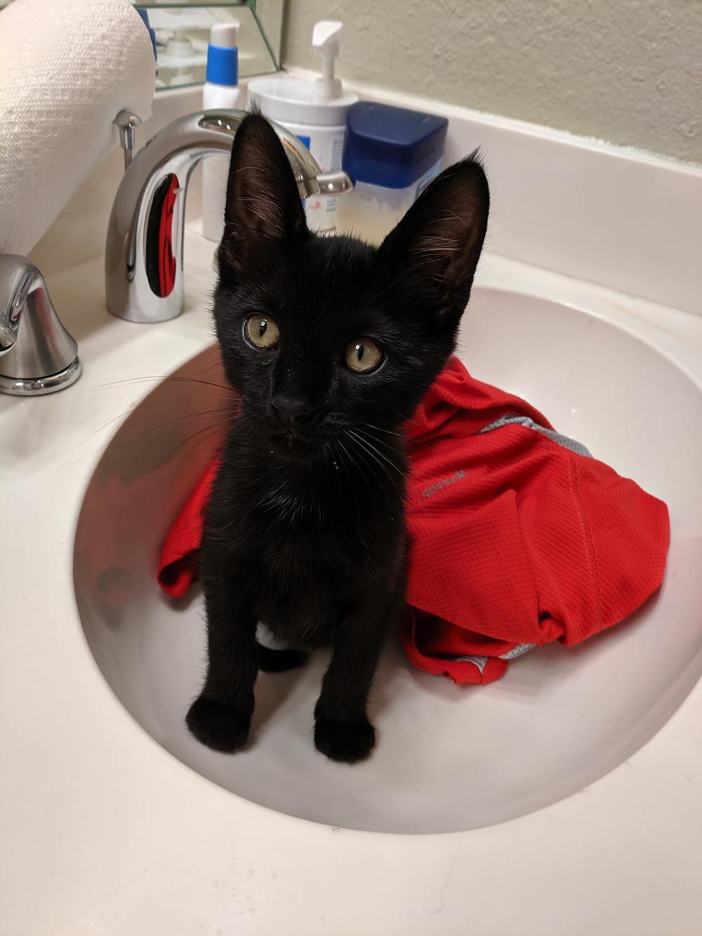 Magni in the sink.