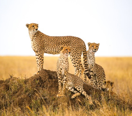 5 Awesome Reasons to Go on a Safari after Isolation