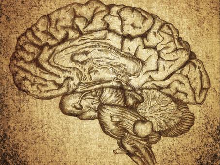 """Aslında Üç Beynimiz Olabilir Mi? """"Neokorteks, Limbik ve Serebellum Beyin"""""""