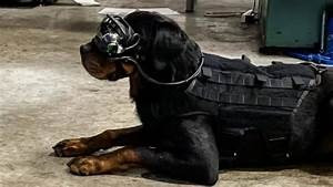 U.S Army Testing AR Goggles on Dogs