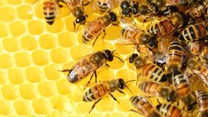 Bist du eine Superbiene? Wo bleibt dein Honig?