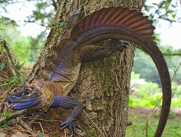 Image Source: Reptiles Magazine (Scott Corning)