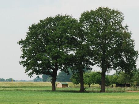 """Nieuwsbrief """"Samen Bomen""""Juni 2020"""