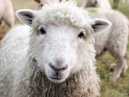 Jacob's Shepherd is Our Shepherd