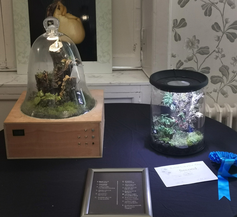 Terrarium display by Diana Petrokaite