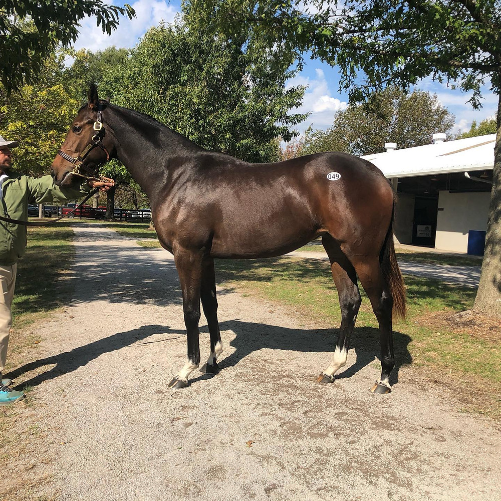 Mshawish Filly Kenny McPeek syndicate Taste of Victory Stables