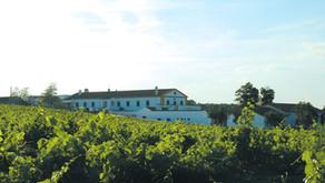 Vinhos Pêra-Manca: mais uma preciosidade da adega Cartuxa
