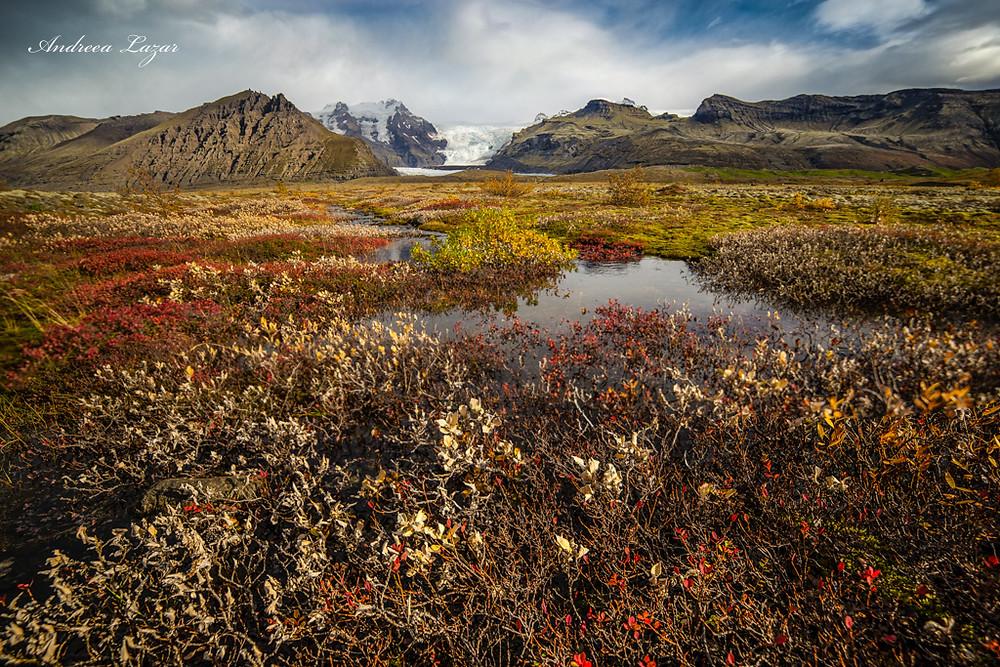 Ciao avventurieri! Inizio questo cammino con un scatto che probabilmente molti lo trovano insolito. Perché? Perché l'Islanda tutti la conosciamo per i suoi ghiacciai, le spiagge nere, vulcani e fiumi di lava. Un pianeta su quale sembra impossibile trovare forme di vita....e pure la Natura ci sorprende un'altra volta! :-)