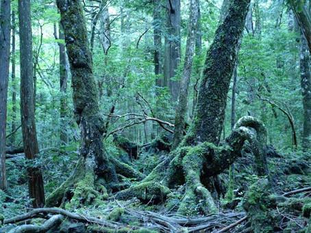 Aokigahara Forest Tour