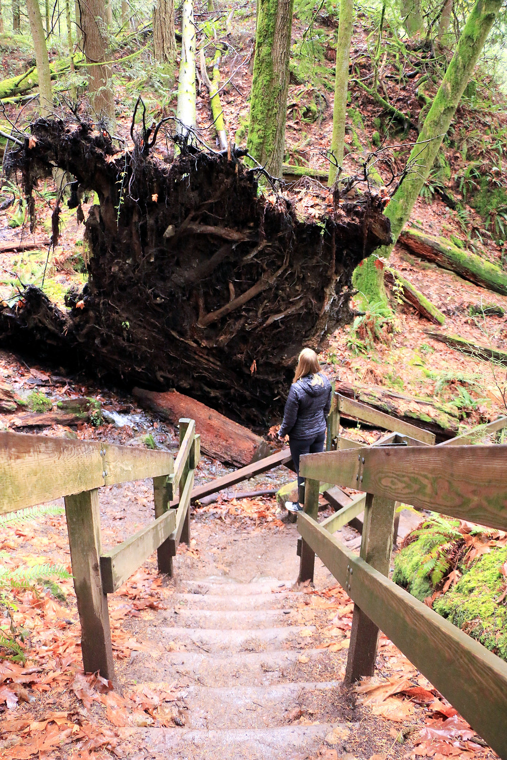 woman standing next to a large fallen over tree on the twin falls trail