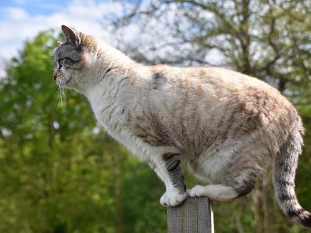 Tipos de Fraturas em Cachorros e Gatos