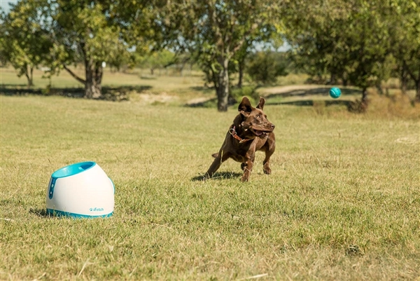 iFetch Too Automatic Ball Launcher – Launching Bigger Balls for Bigger Dogs to play Fetch