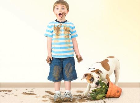 Професійне чищення килимів — це питання безпеки