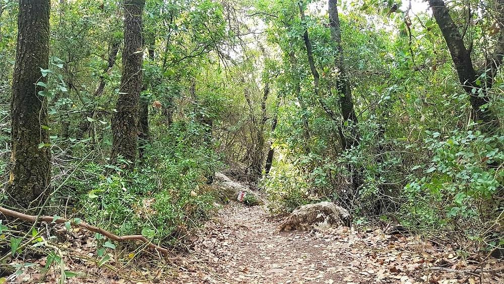 נחל נריה בגליל, מסלול מוצל שמתאים גם לסתיו
