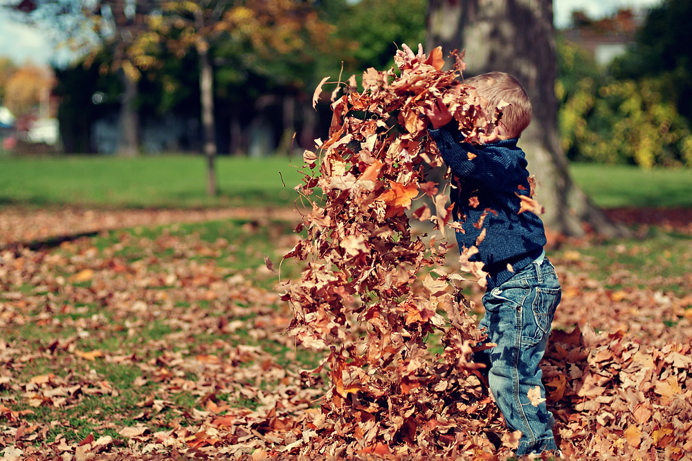 young kid throwing leaves