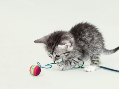 Tips om je kitten op te voeden.