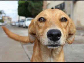 #edublog:cani& conflitti nella relazione