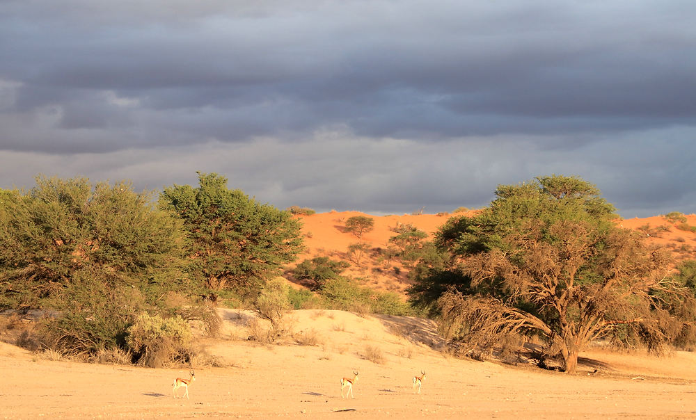 Gewitterstimmung im Kgalagadi Transfrontier Nationalpark