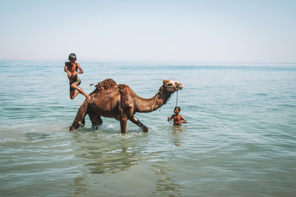 camel bedouin egypt sinai red sea travel