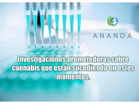 Investigaciones prometedoras sobre cannabis que están sucediendo en estos momentos.