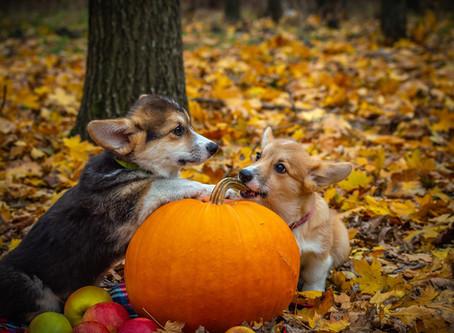 Creepin' It Real: The JCI Team on Halloween Favorites