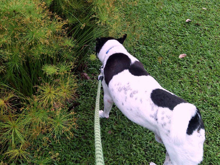 Making a Difference in the Life of a Pet- By Saranya