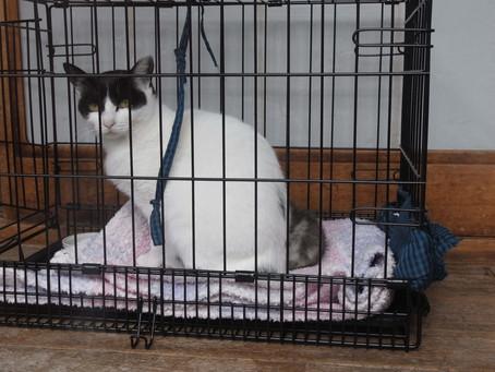 外猫さくらちゃん奮闘記 その16:先住猫と呼ばれてみる?