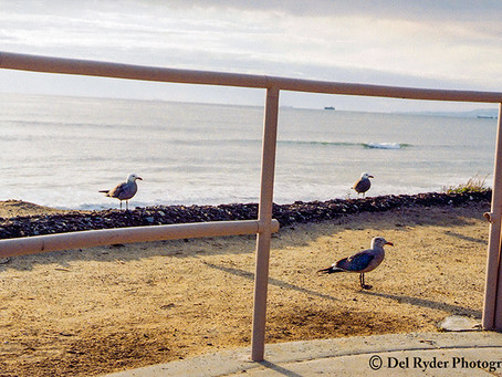 Three Birds on a Bluff