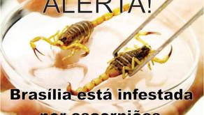 Alerta. Brasília está infestada por escorpiões
