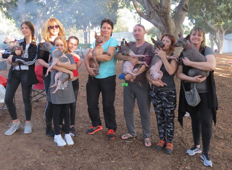 Celebrating the 1-st Anniversary of the first AHT litter in Israel!