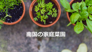 【家庭菜園のすすめ】意外と簡単!?セブ島で家庭菜園に挑戦!
