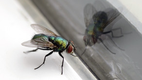What can we learn from a fly?