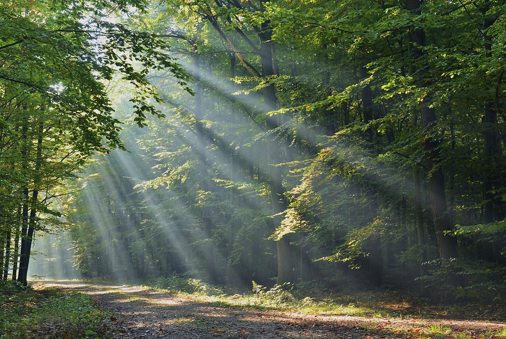Sun-streaming-through-forest.jpg