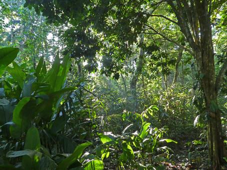 Ein Baum für den Dschungel