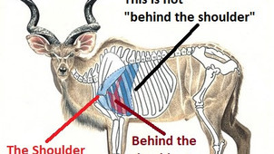 Shot Placement (2):  Kudu