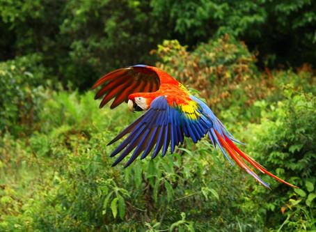 מסע רוחני לקוסטה ריקה 11-24/2/2020