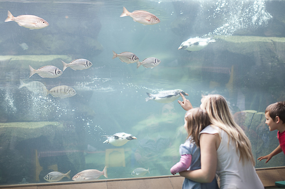 People viewing a fish tank