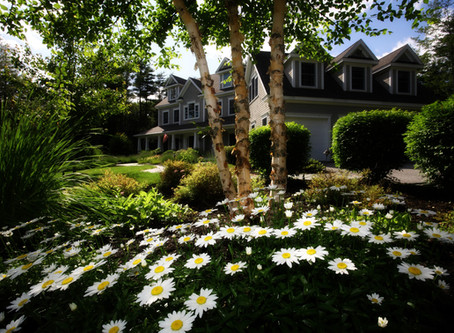 5 steps to creating an environmentally friendly garden