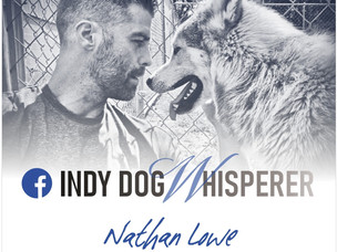 VIDEO: Indy Dog Whisperer gets dogs to behave better