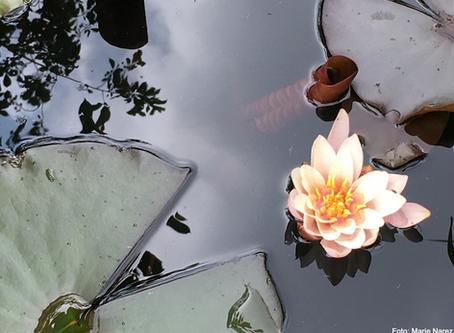 Meditationen im Kundalini Yoga