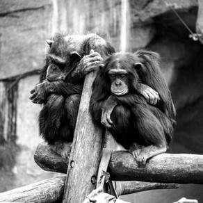 """""""Ich lass mich nicht zum Affen machen!"""" - Die Sache mit dem Widerstand"""