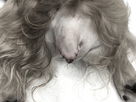 断尾手術を要した犬の常同障害