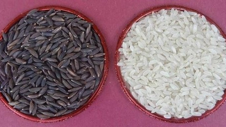 Buddha Rice -Cultivation, Cooking and Health benefits