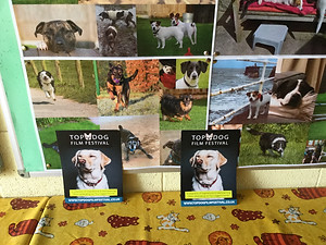 The Ark is a cat and dog rescue centre and is fab