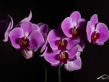 Fotografía creativa de flores en casa # 2