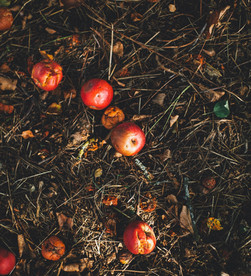 Food Waste: The 2020 Guide