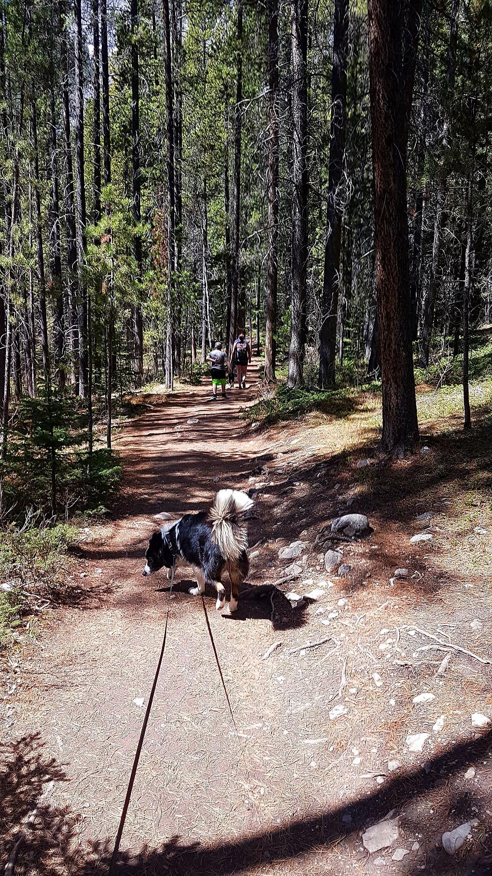 Grassi Lakes Trail, Canmore Alberta, Canada