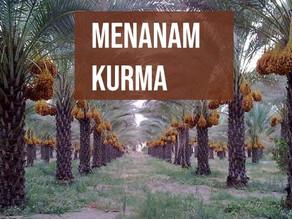 Budidaya Buah Kurma