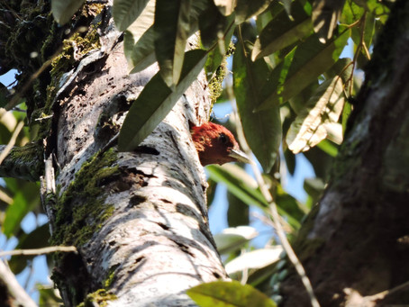 Bird watching in Landak river Bukit Lawang